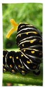 Black Swallowtail Caterpillar Bath Towel