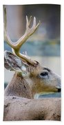 Black-tailed Buck Bath Towel