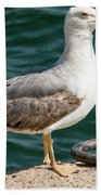 Black Tailed Gull On Dock Bath Towel
