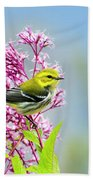 Black Throated Green Warbler Hand Towel by Christina Rollo