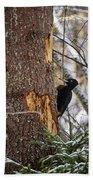 Black Woodpecker Peek Bath Towel
