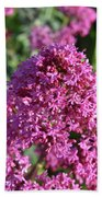 Blooming Brilliant Pink Phlox Flowers In A Garden Hand Towel