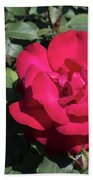 Blooming Rose With New Rose In Garden Bath Towel