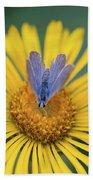 Blue Butterfly On Alpine Sunflower Bath Towel