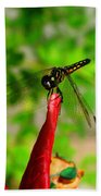 Blue Dasher Damselfly Bath Towel