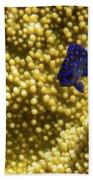 Blue Fish In Coral Bath Towel