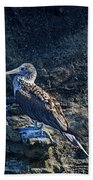 Blue-footed Booby Prize Bath Towel