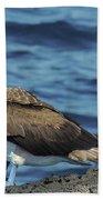 Blue-footed Booby  Puerto Egas James Bay Santiago James Island Galapagos Islands Bath Towel