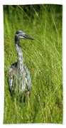 Blue Heron In A Marsh Bath Towel