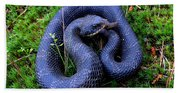 Blue Hognose Bath Towel