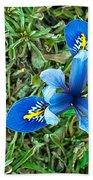 Blue Iris Hermodactyloides Bath Towel