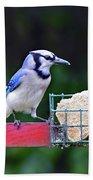 Blue Jay - Cyanocitta Cristata  Bath Towel