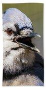 Blue Jay Portrait Bath Towel