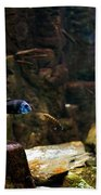 Blue Little Fish In Aquarium Bath Towel