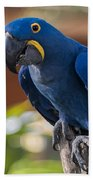 Blue Macaw Bath Towel