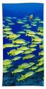 Blue Stripe Snapper Bath Towel
