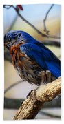 Bluebird In May Bath Towel