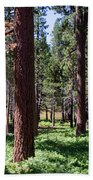 Bluff Lake Ca Fern Forest 2 Bath Towel