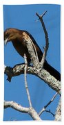 Boat Tailed Grackle Bath Towel
