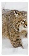 Bobcat In Snow Bath Towel