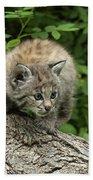 Bobcat Kitten Exploration Bath Towel