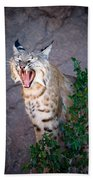 Bobcat Yawn Bath Towel