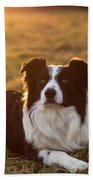 Border Collie At Sunset With Warm Colors Bath Towel