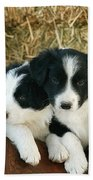Border Collie Puppies Bath Towel