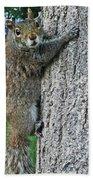 Boston Common Squirrel Hanging From A Tree Boston Ma Bath Towel