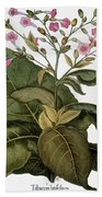 Botany: Tobacco Plant Bath Towel
