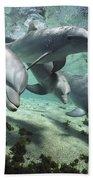 Four Bottlenose Dolphins Hawaii Hand Towel by Flip Nicklin