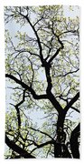 Branches Against Sky In Spring Outback Bath Towel