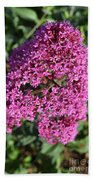Brilliant Hot Pink Flowering Phlox Flowers In A Garden Hand Towel