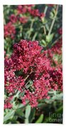 Brilliant Red Blooming Phlox Flowers In A Garden Bath Towel
