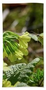 Brimstone On Cowslip Primrose Bath Towel
