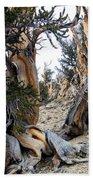 Bristlecone Forest, Ca November 2105 Bath Towel