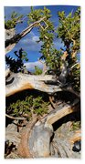 Bristlecone Great Basin Landscape Bath Towel