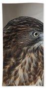 Broad-winged Hawk Bath Towel
