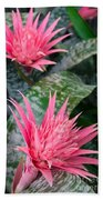 Bromeliad Plant 3 Bath Towel