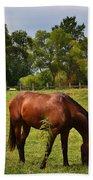 Brown Horse In Holland Bath Towel