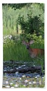 Buck In Pond Hand Towel