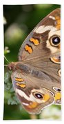 Buckeye Butterfly Square Bath Towel