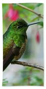 Buff-tailed Coronet Bath Towel
