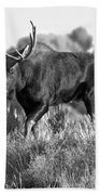 Bull On A Blue Sky Day Black And White Bath Towel