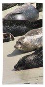 Bunch Of Harbor Seals Resting On A Beach Bath Towel