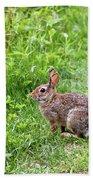 Bunny Rabbit Bath Towel