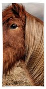 Bushy Icelandic Horse Hand Towel by Pradeep Raja PRINTS