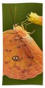 Butterfly Delight Bath Towel