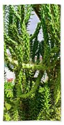 Cactus At Pilgrim Place In Claremont-california  Bath Towel