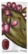 Cactus: Opuntia, 1613 Bath Towel